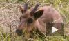 Из несчастных оленей петербургские живодеры хотели сделать шашлык