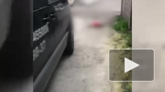 В Сочи водитель задавил собаку и скрылся