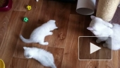Коты и жучок