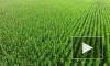 Россия приостанавливает экспорт зерновых за пределы ЕАЭС