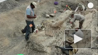 В Мексике найден хвост динозавра в отличном состоянии