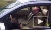 Пьяный виновник ДТП на Петергофском шоссе уснул в ожидании ГИБДД