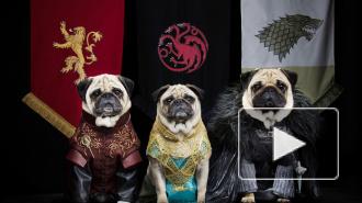 """""""Игра престолов"""" после 4 сезона уходит из мира людей, но возрождается в мире животных"""