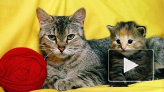 Кот-мститель на Youtube прославился на весь интернет тем, как жестко отреагировал на преследования человека