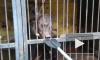 Ветеринары настояли на остановке эвакуации в затопленном зоопарке Уссурийска